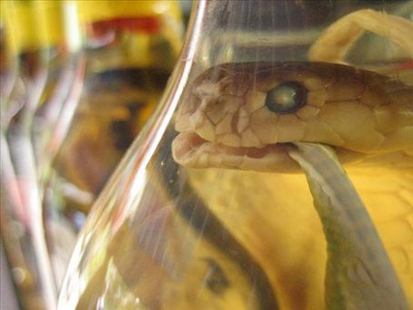 BUY SNAKE LIQUOR FROM HANOI SNAKE VILLAGE IN VIETNAM